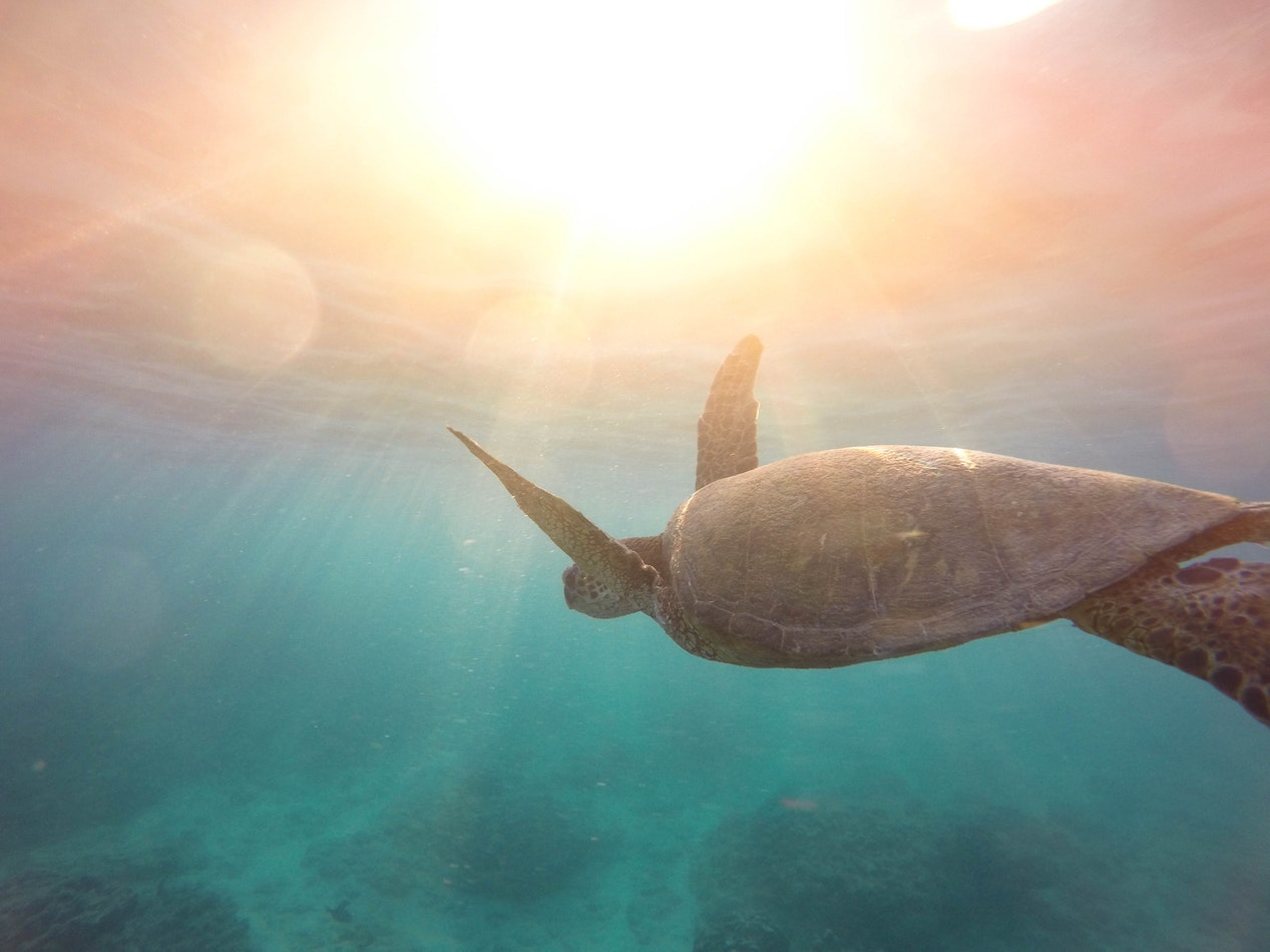 Best Resorts to Swim with Sea Turtles HolidayTaxis